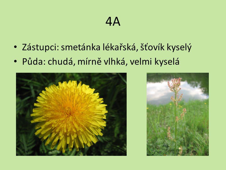 4A Zástupci: smetánka lékařská, šťovík kyselý Půda: chudá, mírně vlhká, velmi kyselá