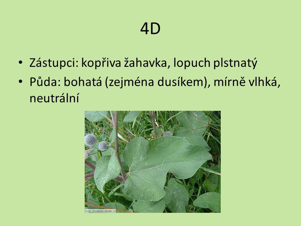 4D Zástupci: kopřiva žahavka, lopuch plstnatý Půda: bohatá (zejména dusíkem), mírně vlhká, neutrální