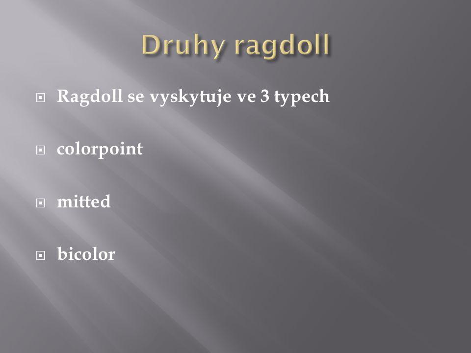  Ragdoll se vyskytuje ve 3 typech  colorpoint  mitted  bicolor