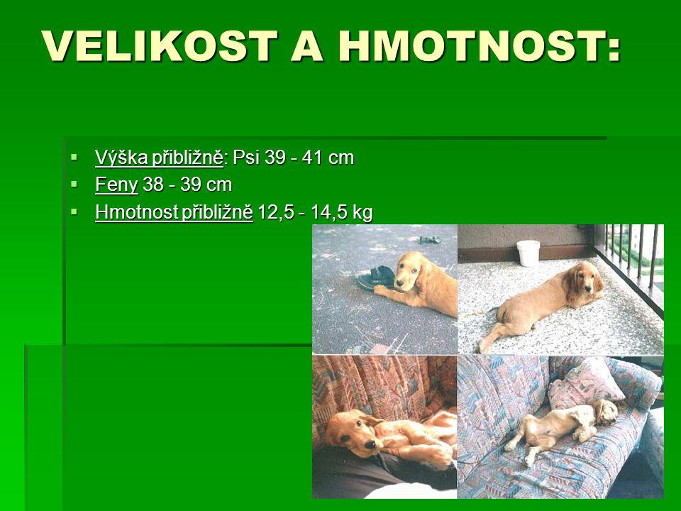 VELIKOST A HMOTNOST:  Výška přibližně: Psi 39 - 41 cm  Feny 38 - 39 cm  Hmotnost přibližně 12,5 - 14,5 kg