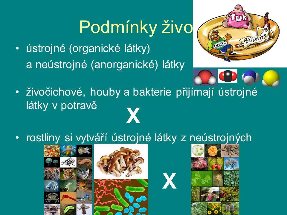 Podmínky života ústrojné (organické látky) a neústrojné (anorganické) látky živočichové, houby a bakterie přijímají ústrojné látky v potravě rostliny