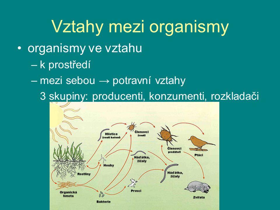Vztahy mezi organismy organismy ve vztahu –k prostředí –mezi sebou → potravní vztahy 3 skupiny: producenti, konzumenti, rozkladači