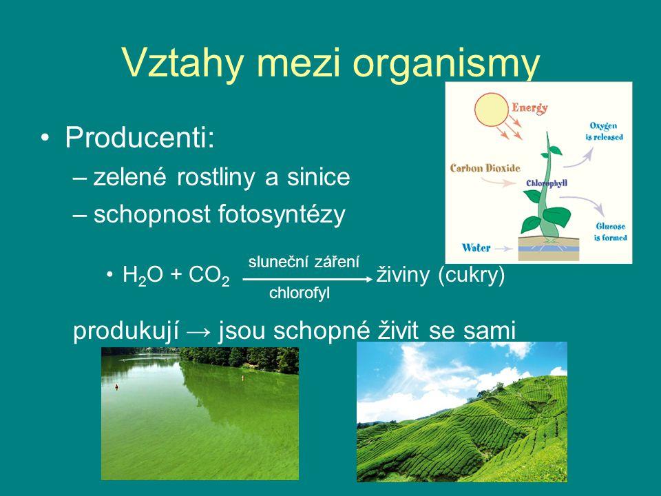 Vztahy mezi organismy Producenti: –zelené rostliny a sinice –schopnost fotosyntézy H 2 O + CO 2 živiny (cukry) produkují → jsou schopné živit se sami