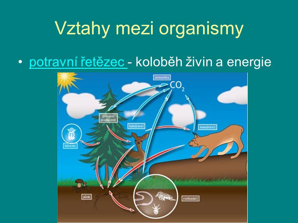 Vztahy mezi organismy potravní řetězec - koloběh živin a energiepotravní řetězec