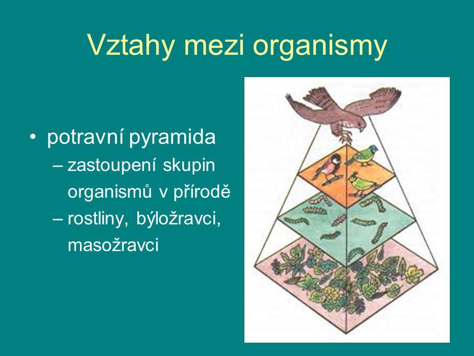 Vztahy mezi organismy potravní pyramida –zastoupení skupin organismů v přírodě –rostliny, býložravci, masožravci