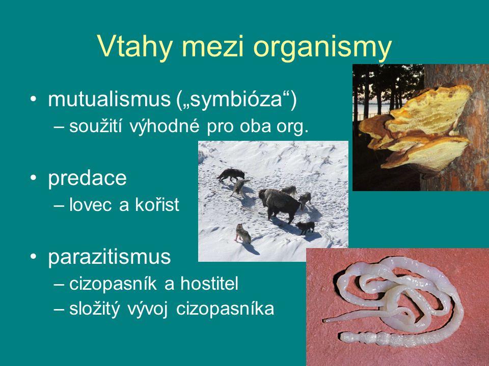 """Vtahy mezi organismy mutualismus (""""symbióza"""") –soužití výhodné pro oba org. predace –lovec a kořist parazitismus –cizopasník a hostitel –složitý vývoj"""
