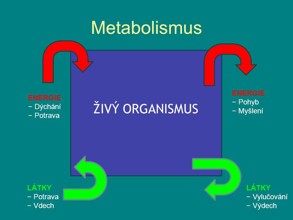 Metabolismus ŽIVÝ ORGANISMUS ENERGIE − Pohyb − Myšlení ENERGIE − Dýchání − Potrava LÁTKY − Potrava − Vdech LÁTKY − Vylučování − Výdech