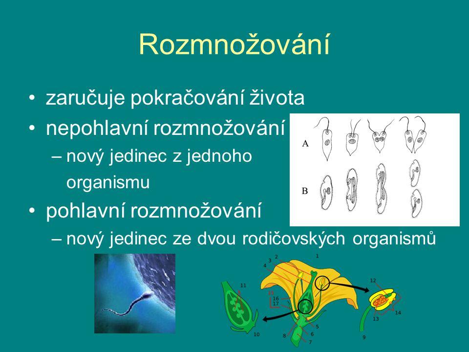 Vývoj vývoj druhu = evoluce