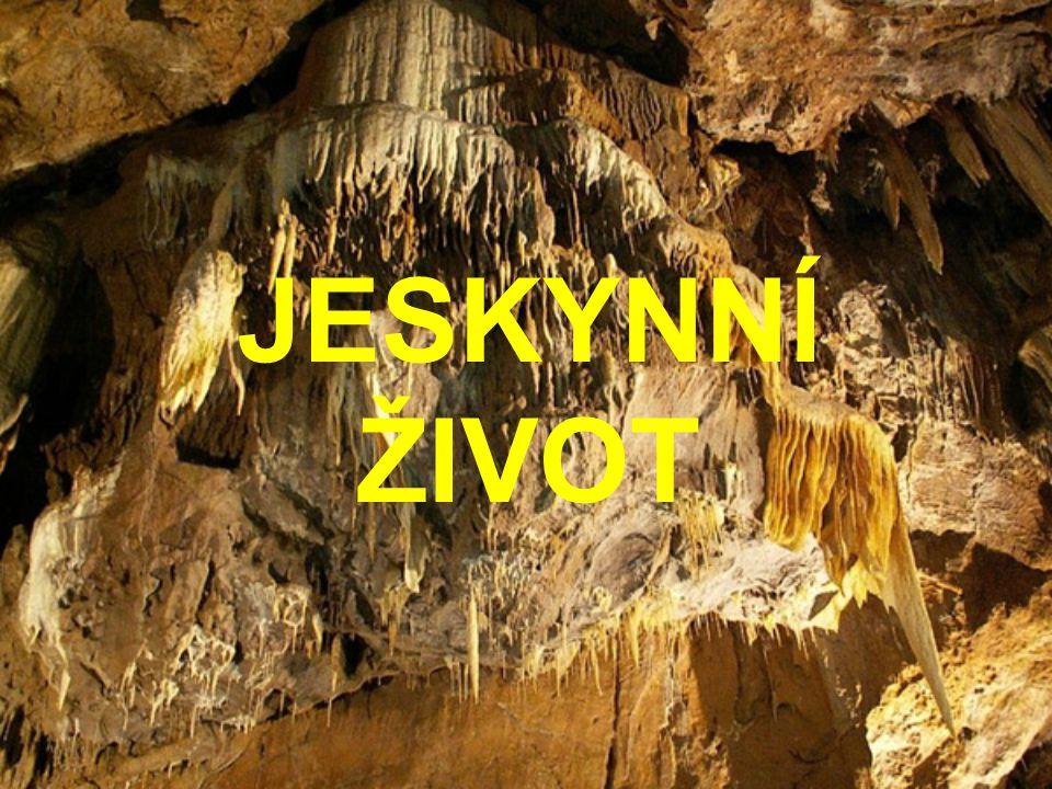 ZIMOVÁNÍ NETOPÝRŮ JEJICH TRUS JE POTRAVOU PRO BEZOBRATLÉ OBYVATELE JESKYNÍ