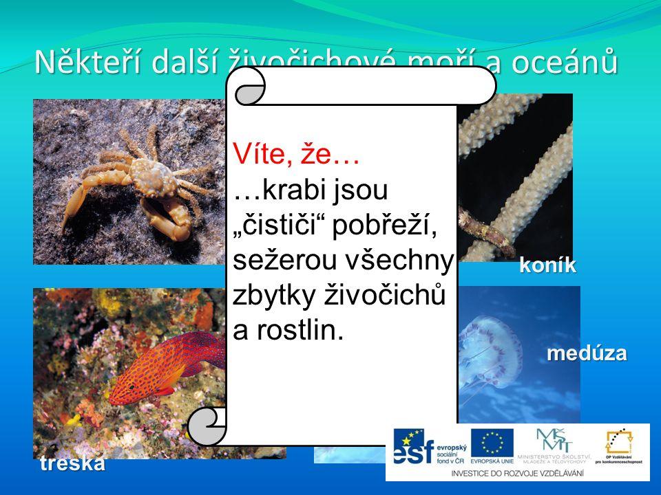 """Někteří další živočichové moří a oceánů krabkoník medúza treska Víte, že… …krabi jsou """"čističi"""" pobřeží, sežerou všechny zbytky živočichů a rostlin."""