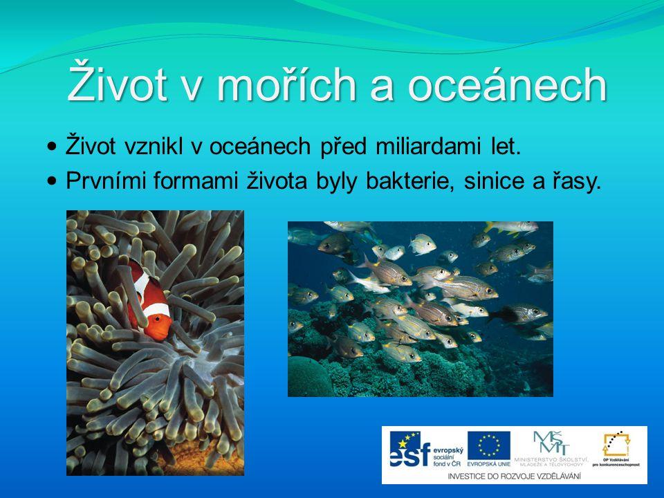 Život v mořích a oceánech Život vznikl v oceánech před miliardami let. Prvními formami života byly bakterie, sinice a řasy.