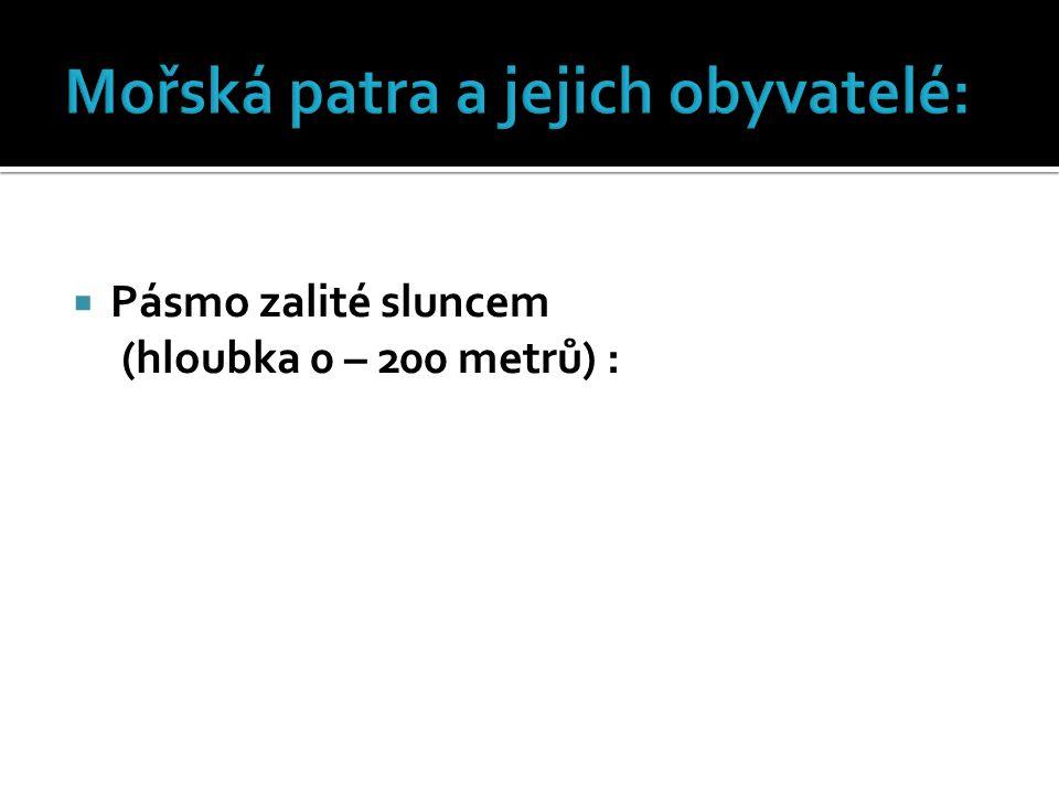  Pásmo zalité sluncem (hloubka 0 – 200 metrů) :