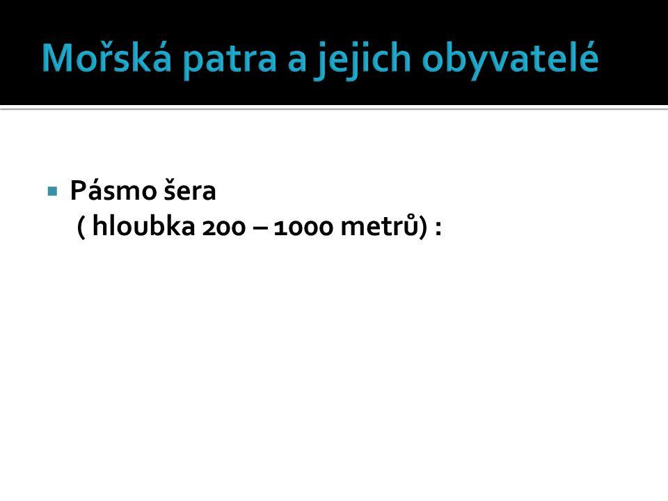  Pásmo šera ( hloubka 200 – 1000 metrů) :