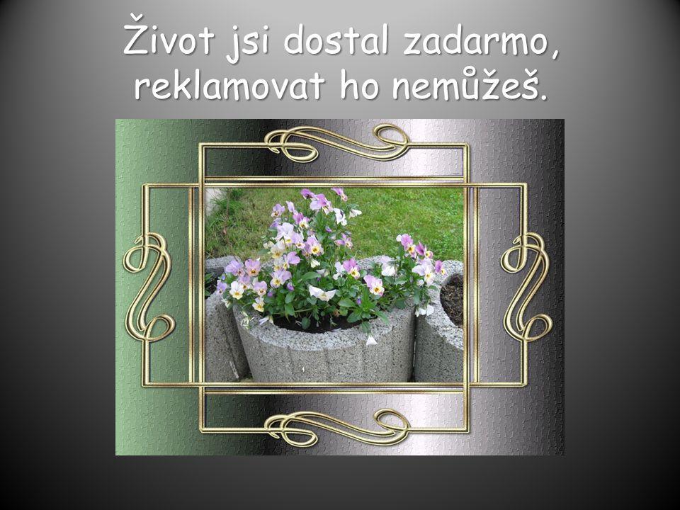 Člověk jest jméno mé, to ostatní je příjmení. www.vendy.estrank y.cz