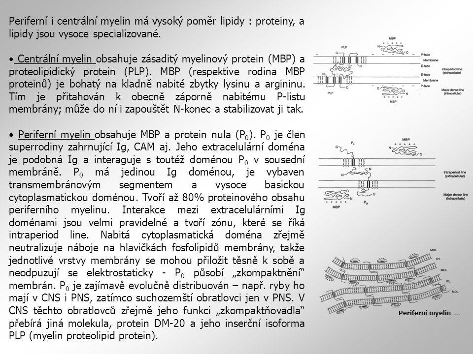 Periferní i centrální myelin má vysoký poměr lipidy : proteiny, a lipidy jsou vysoce specializované. Centrální myelin obsahuje zásaditý myelinový prot