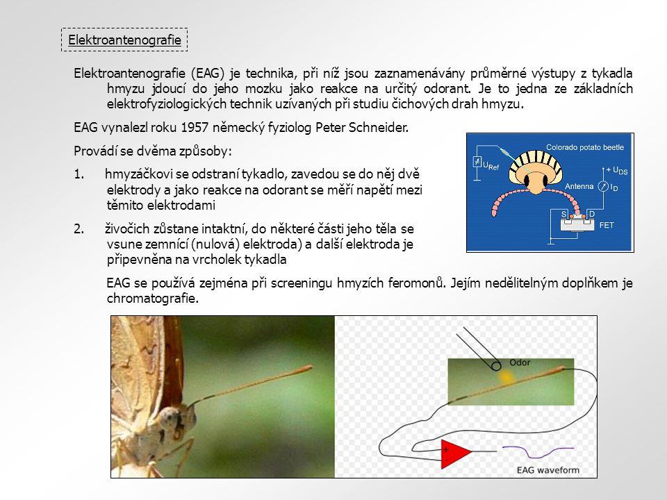 Elektroantenografie (EAG) je technika, při níž jsou zaznamenávány průměrné výstupy z tykadla hmyzu jdoucí do jeho mozku jako reakce na určitý odorant.