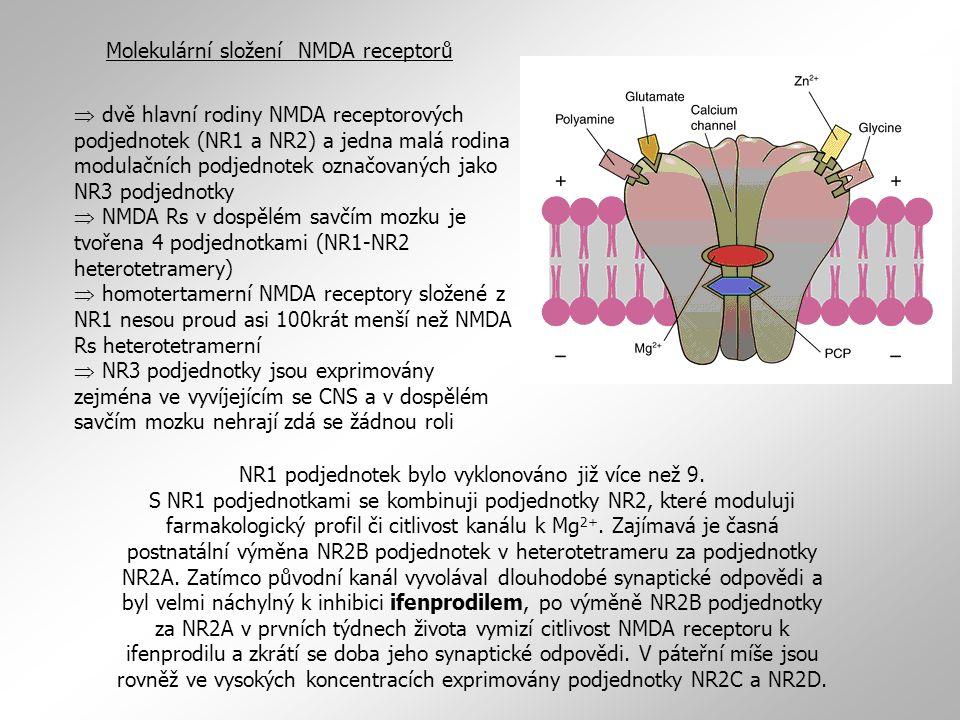 Molekulární složení NMDA receptorů  dvě hlavní rodiny NMDA receptorových podjednotek (NR1 a NR2) a jedna malá rodina modulačních podjednotek označova