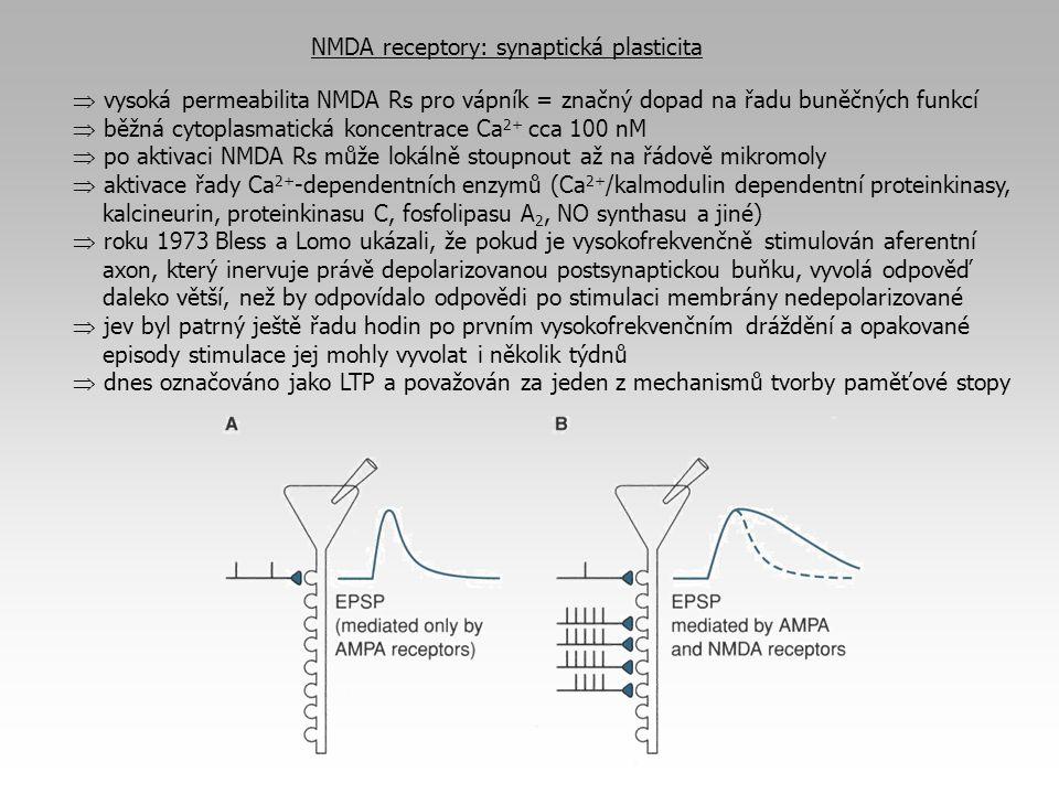 NMDA receptory: synaptická plasticita  vysoká permeabilita NMDA Rs pro vápník = značný dopad na řadu buněčných funkcí  běžná cytoplasmatická koncent