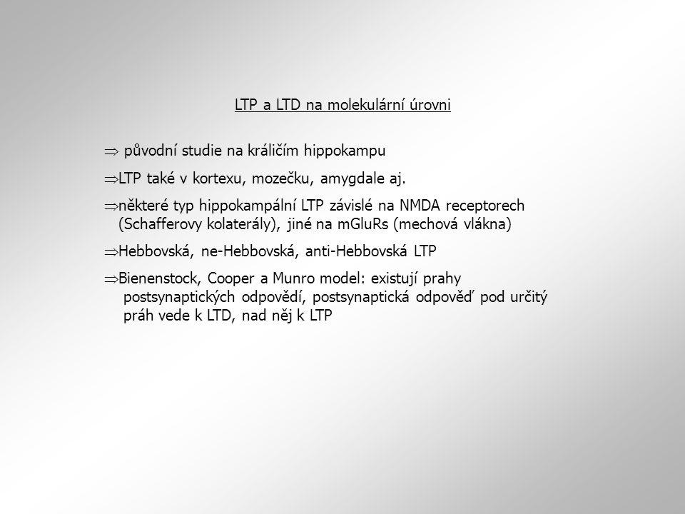  původní studie na králičím hippokampu  LTP také v kortexu, mozečku, amygdale aj.  některé typ hippokampální LTP závislé na NMDA receptorech (Schaf