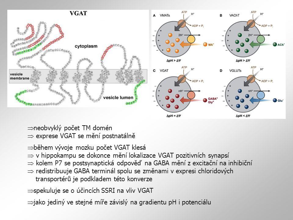  neobvyklý počet TM domén  exprese VGAT se mění postnatálně  během vývoje mozku počet VGAT klesá  v hippokampu se dokonce mění lokalizace VGAT poz