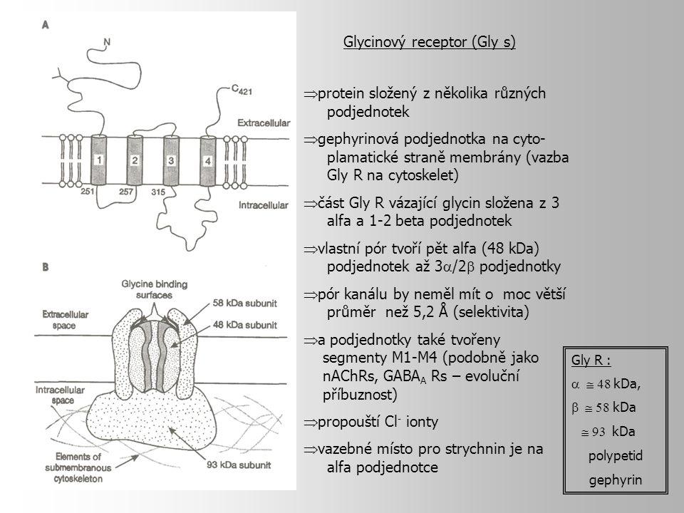  protein složený z několika různých podjednotek  gephyrinová podjednotka na cyto- plamatické straně membrány (vazba Gly R na cytoskelet)  část Gly