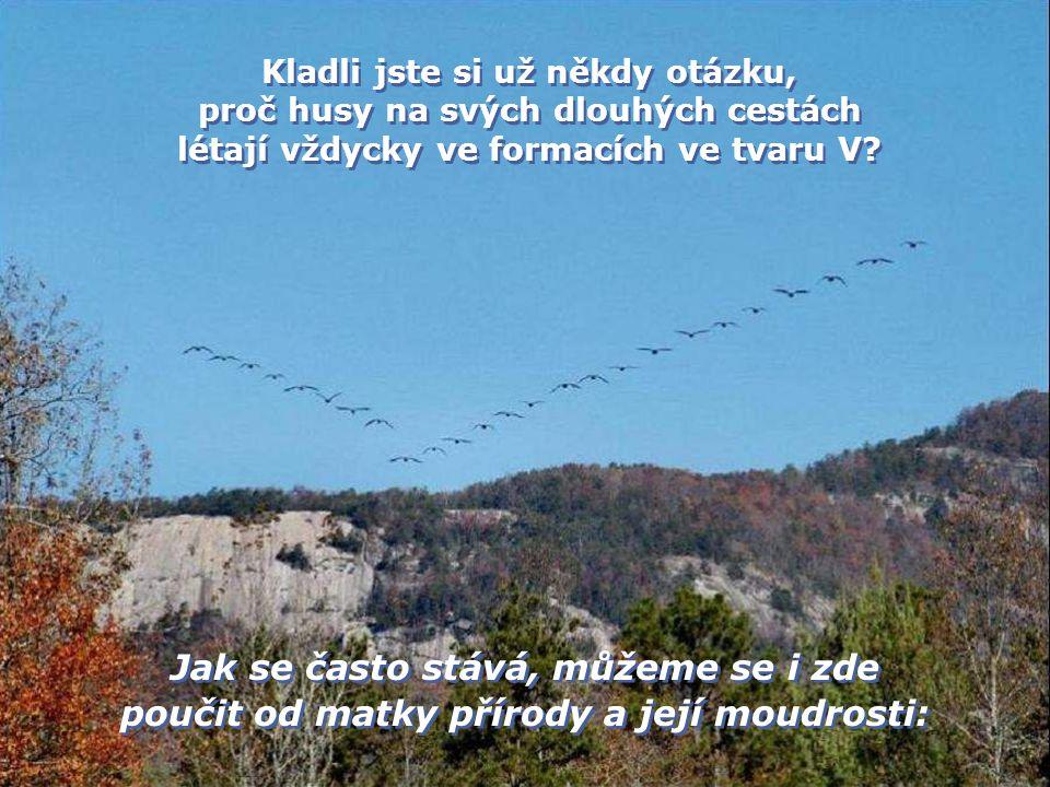 Kladli jste si už někdy otázku, proč husy na svých dlouhých cestách létají vždycky ve formacích ve tvaru V.