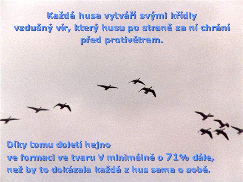 Každá husa vytváří svými křídly vzdušný vír, který husu po straně za ní chrání před protivětrem.