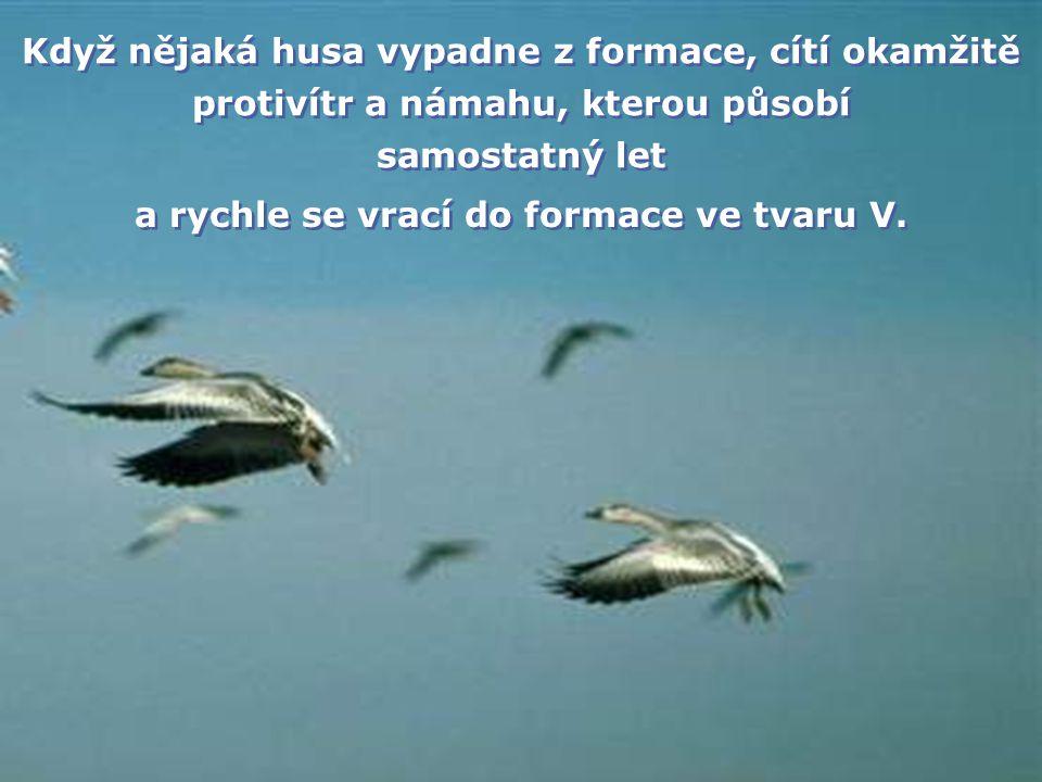 Každá husa vytváří svými křídly vzdušný vír, který husu po straně za ní chrání před protivětrem. Díky tomu doletí hejno ve formaci ve tvaru V minimáln