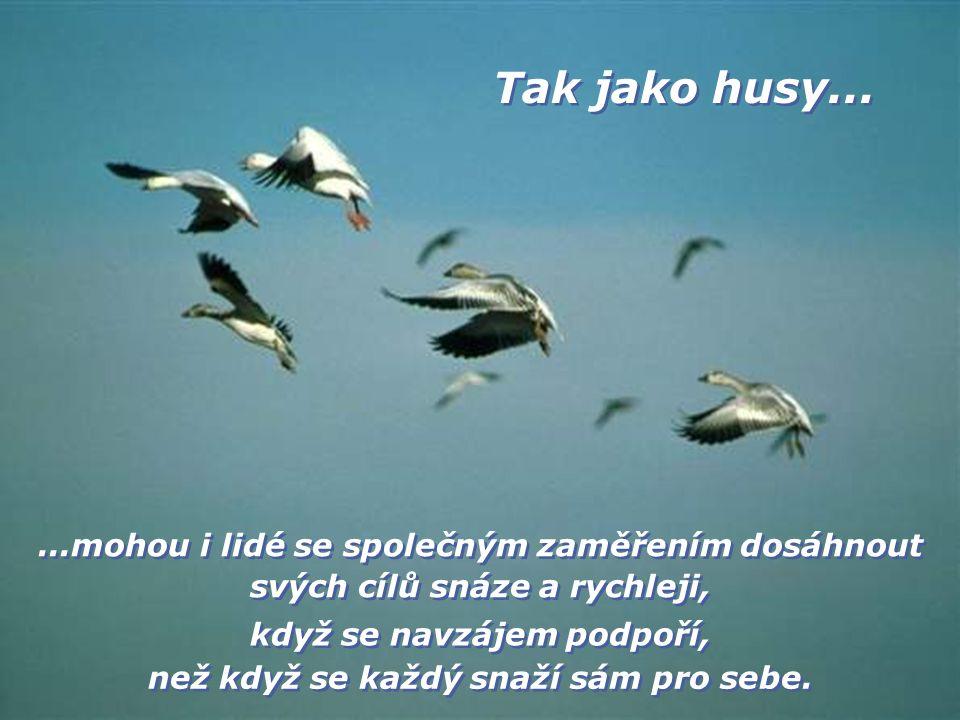 ...mohou i lidé se společným zaměřením dosáhnout svých cílů snáze a rychleji, Tak jako husy...