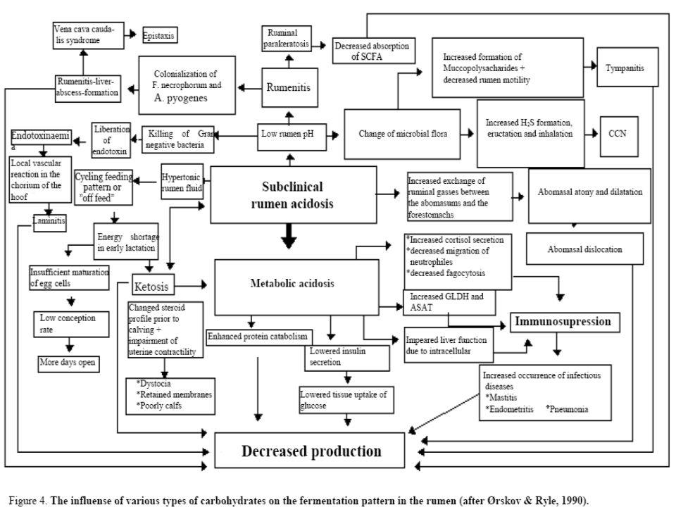 ACIDÓZY: Acidóza klinická a acidóza subklinická ACIDÓZA AKUTNÍ (nebo LATENTNÍ) ACIDOZA SUBKLINICKÁ ( CHRONICKÁ ) Podmínky Stres Přísun živin Důsledky přímé, klinické a izolované Problémy týkající se chování ve stádě, nízká užitkovost, menší resistence na infekce