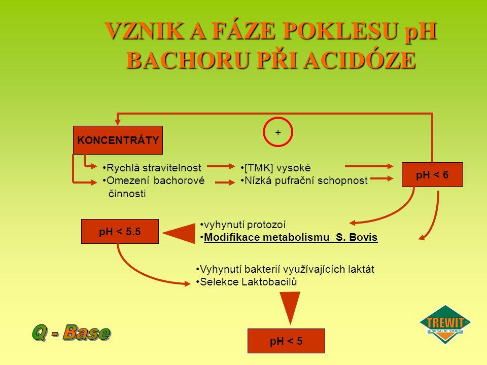 VZNIK A FÁZE POKLESU pH BACHORU PŘI ACIDÓZE 1.Vyhynutí protozoí : –příliš mnoho využitelného škrobu pro fermentaci bakterií –vyšší rychlost fermentace 2.Modifikovaný metabolismus Streptococcus Bovis : –produkce laktátu a ztráta acetátu –bakterie tolerantní na kyselé prostředí (to je na pH 5)