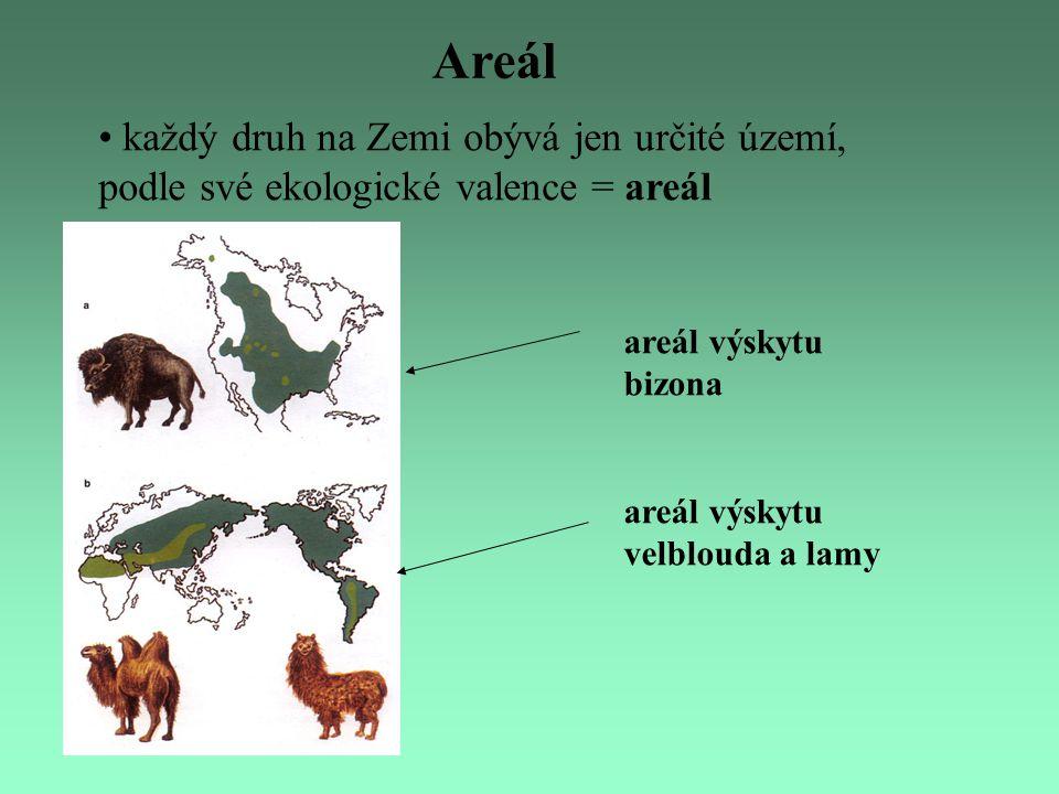 Areál každý druh na Zemi obývá jen určité území, podle své ekologické valence = areál areál výskytu bizona areál výskytu velblouda a lamy
