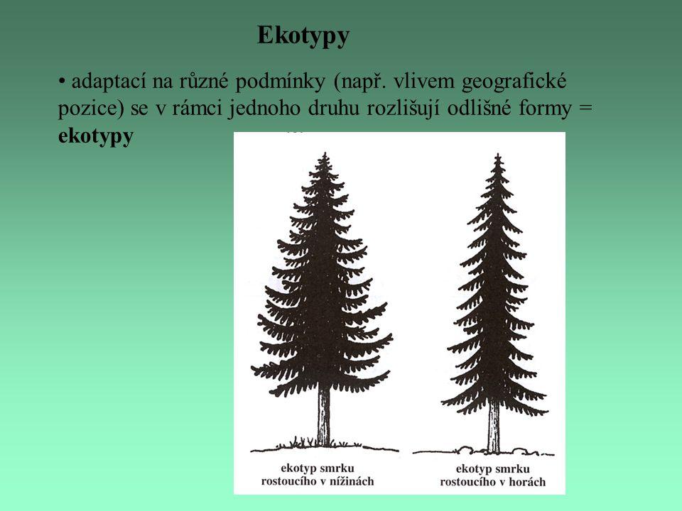 Ekotypy adaptací na různé podmínky (např. vlivem geografické pozice) se v rámci jednoho druhu rozlišují odlišné formy = ekotypy
