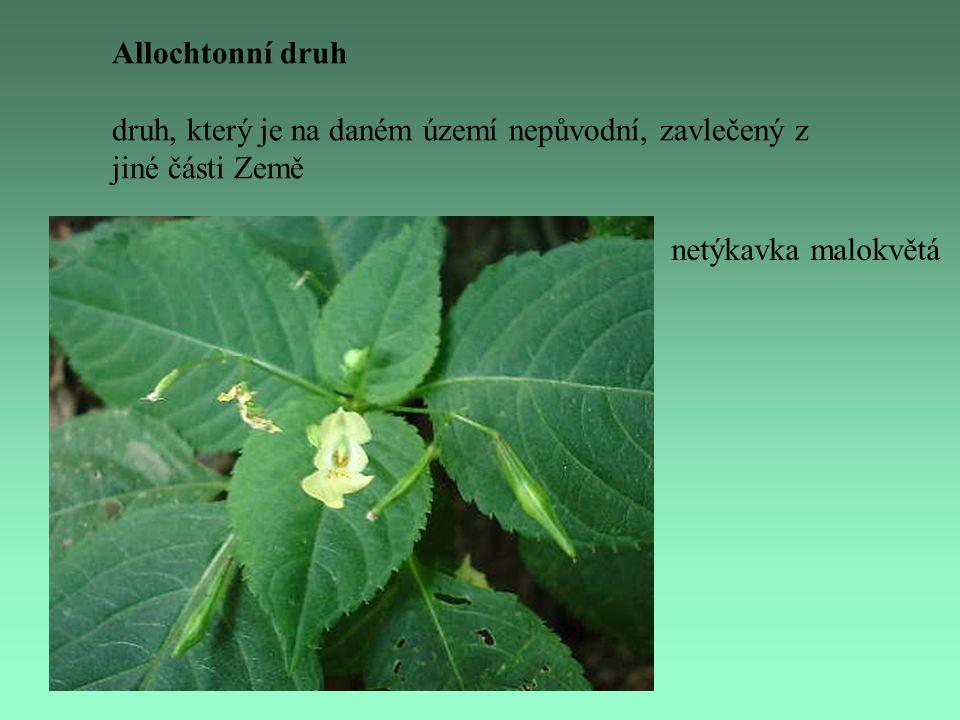 Allochtonní druh druh, který je na daném území nepůvodní, zavlečený z jiné části Země netýkavka malokvětá