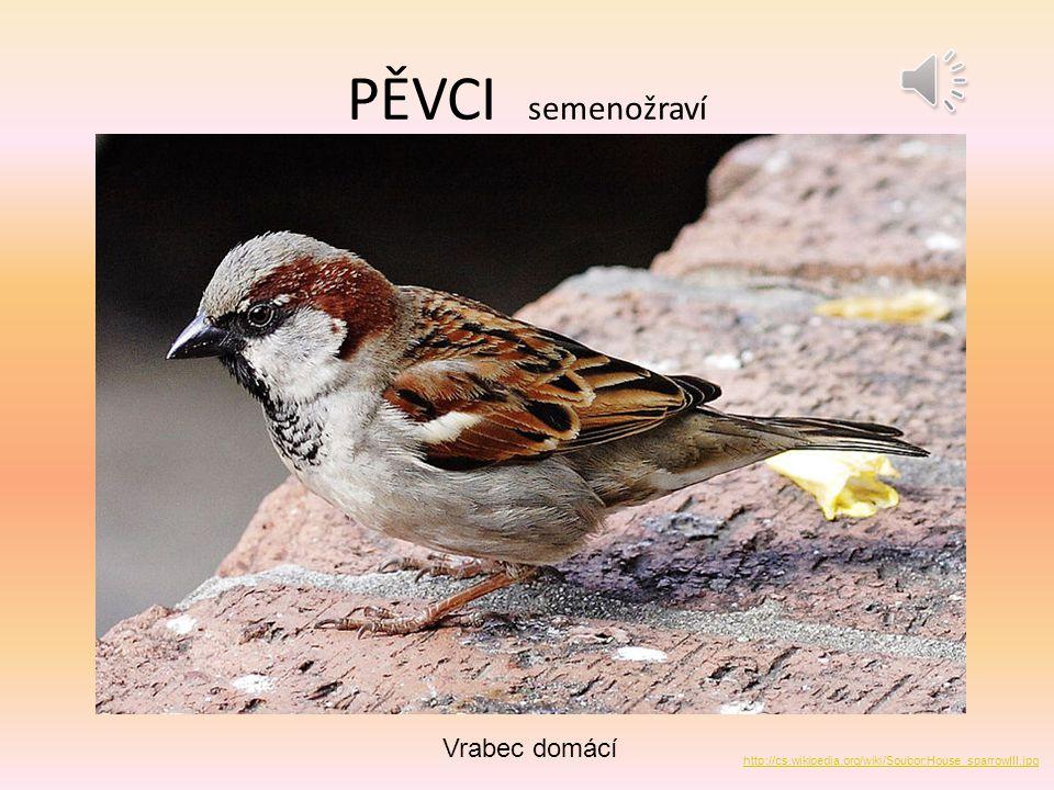 PĚVCI semenožraví Vrabec polní http://cs.wikipedia.org/wiki/Soubor:Tree_Sparrow_August_2007_Osaka_Japan.jpg
