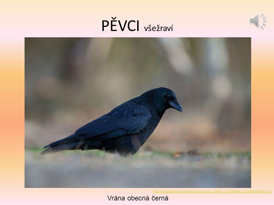 PĚVCI všežraví Vrána obecná černá http://cs.wikipedia.org/wiki/Soubor:Corvus_corone_1_%28Marek_Szczepanek%29.jpg