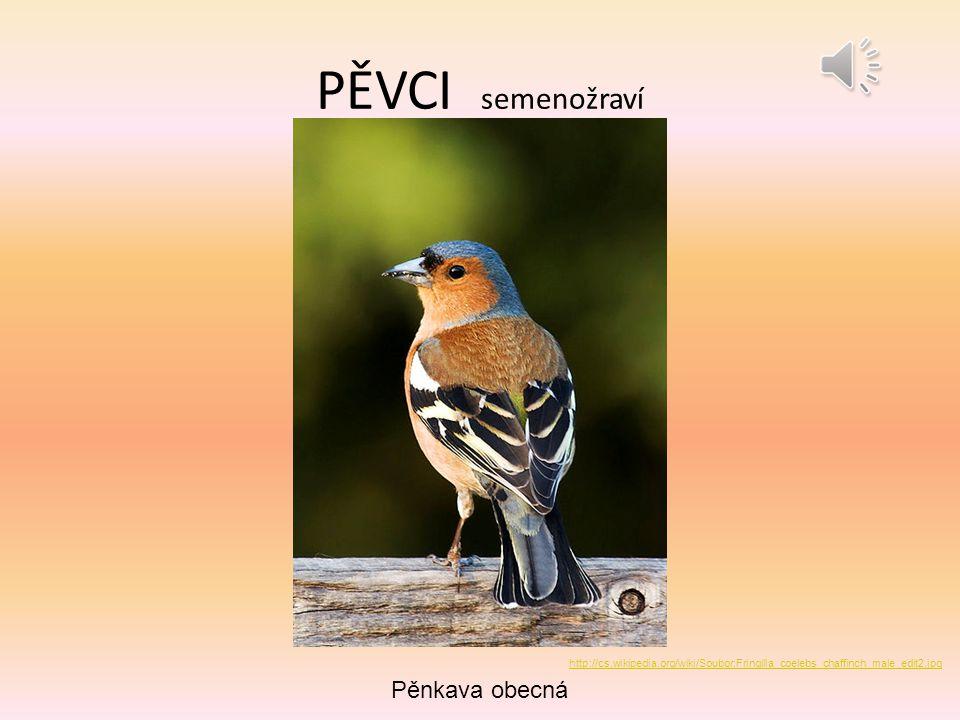 PĚVCI semenožraví Pěnkava obecná http://cs.wikipedia.org/wiki/Soubor:Fringilla_coelebs_chaffinch_male_edit2.jpg