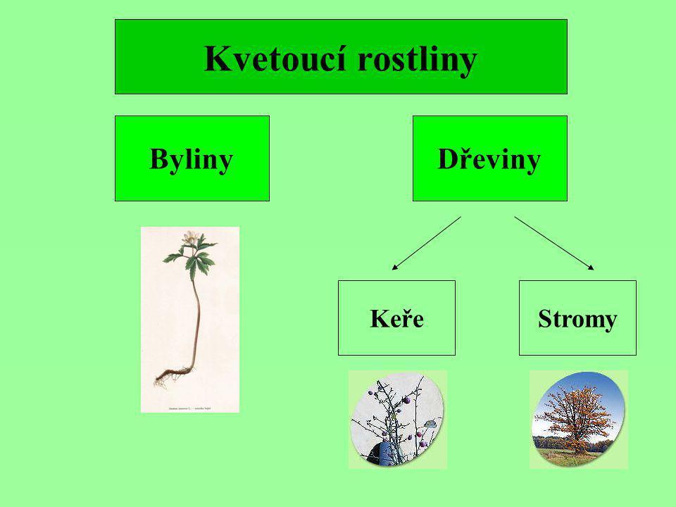 DřevinyByliny KeřeStromy Kvetoucí rostliny