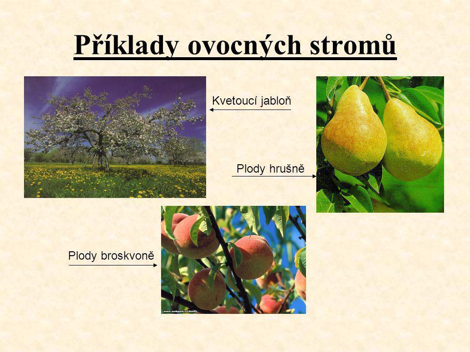Příklady ovocných stromů Kvetoucí jabloň Plody hrušně Plody broskvoně