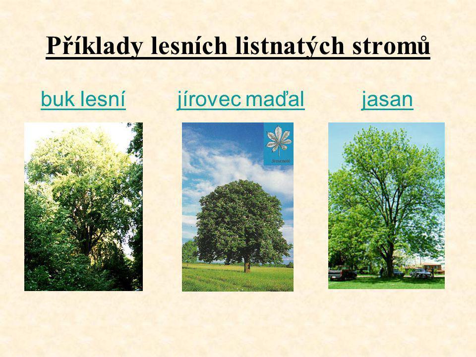 Příklady lesních listnatých stromů buk lesní jírovec maďaljasanbuk lesníjírovec maďaljasan
