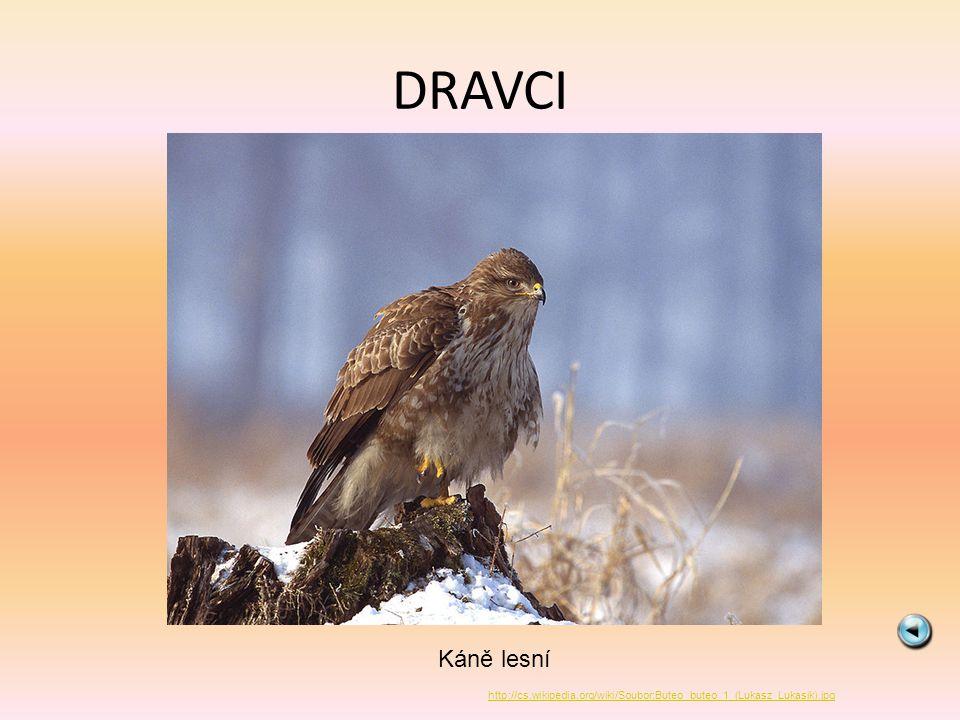 SOVY Výr velký http://cs.wikipedia.org/wiki/Soubor:Eagle.owl.arp.750pix.jpg