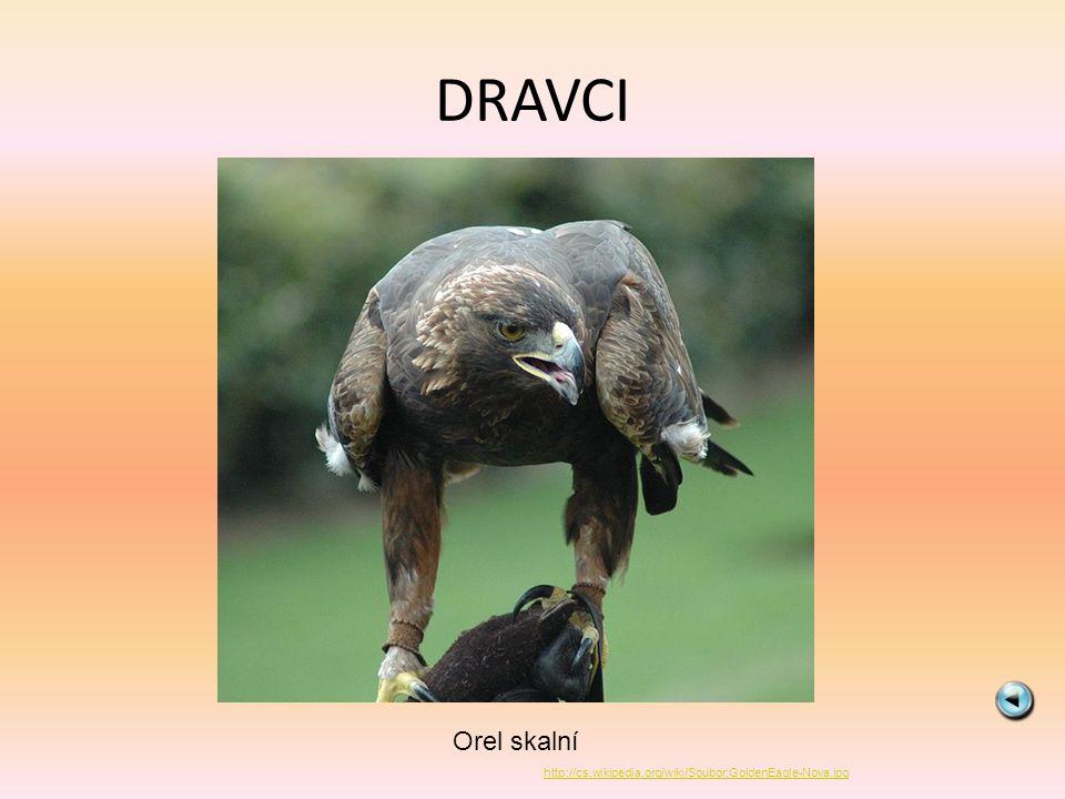 DRAVCI Sup bělohlavý http://cs.wikipedia.org/wiki/Soubor:Fak%C3%B3kesely%C5%B1_4.jpg