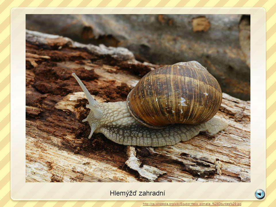 Páskovka keřová http://cs.wikipedia.org/wiki/Soubor:Snail-WA_edit02.jpg