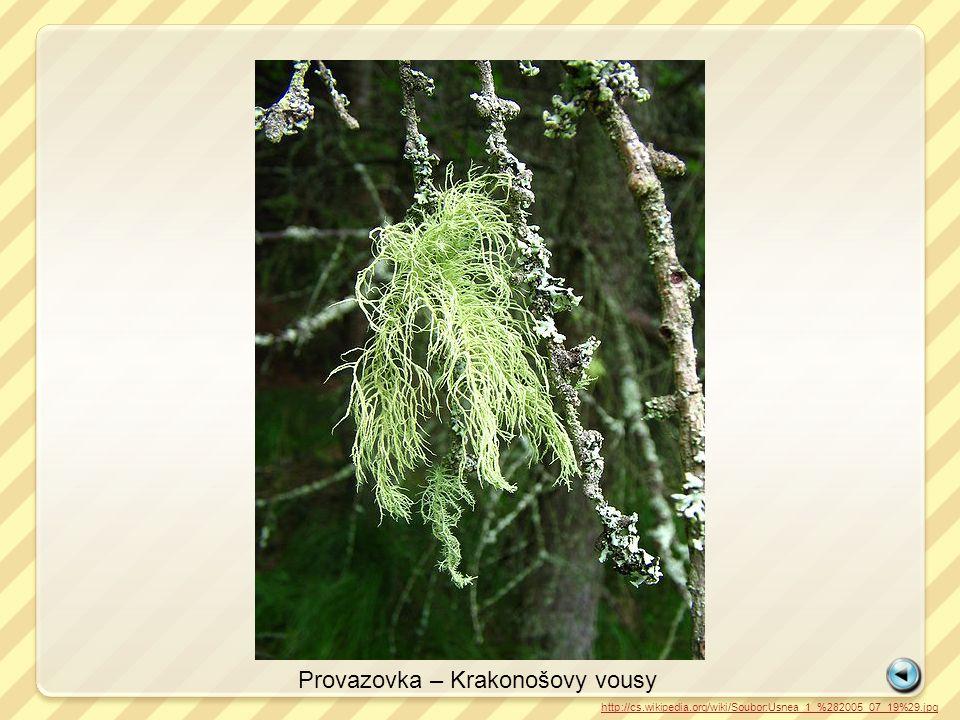 http://cs.wikipedia.org/wiki/Soubor:Usnea_1_%282005_07_19%29.jpg Provazovka – Krakonošovy vousy
