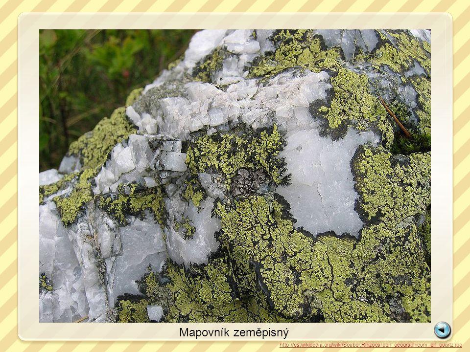 http://cs.wikipedia.org/wiki/Soubor:Rhizocarpon_geographicum_on_quartz.jpg Mapovník zeměpisný
