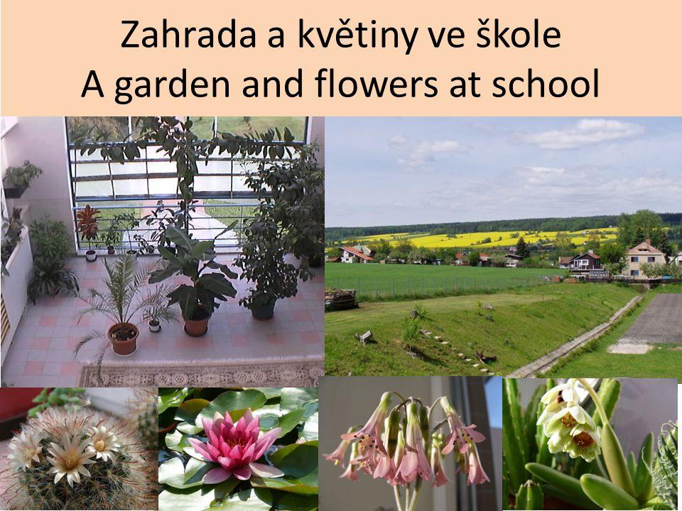Zahrada a květiny ve škole A garden and flowers at school