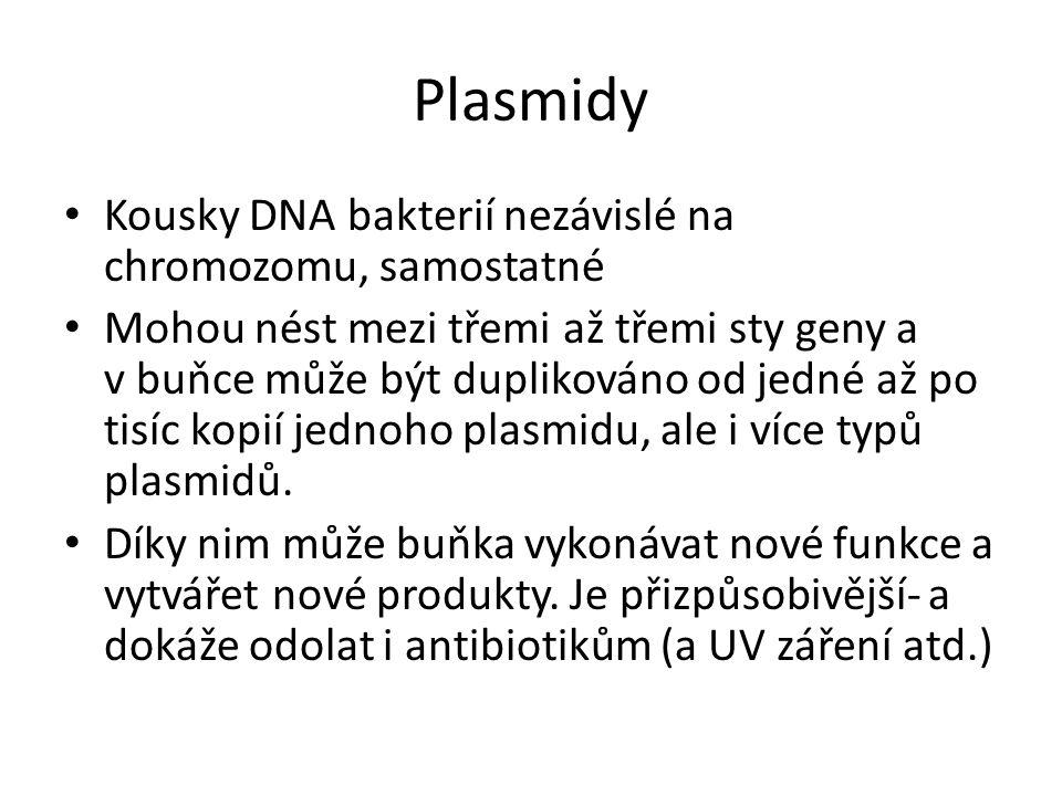 Plasmidy Kousky DNA bakterií nezávislé na chromozomu, samostatné Mohou nést mezi třemi až třemi sty geny a v buňce může být duplikováno od jedné až po