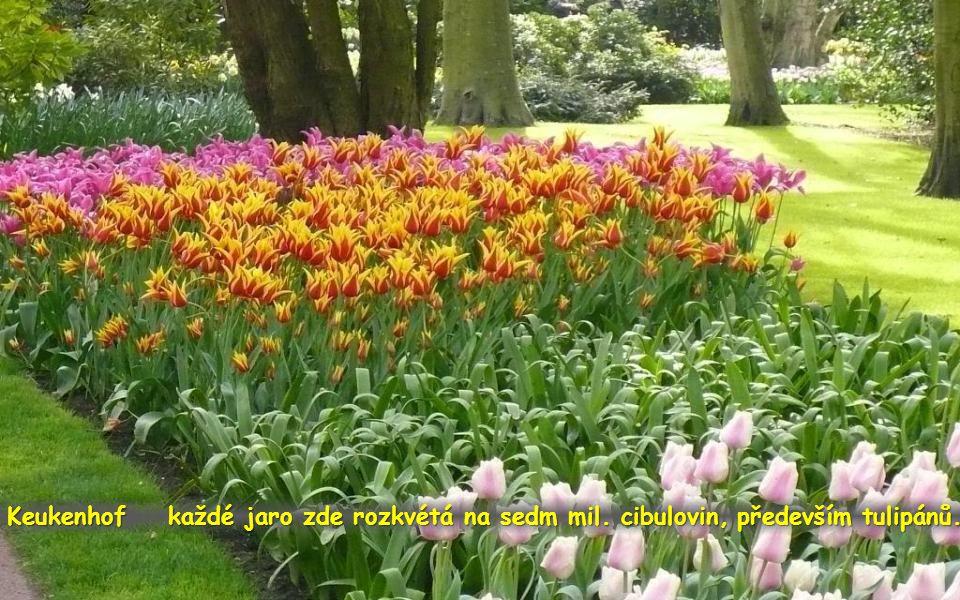 Keukenhof je s rozlohou 32 ha největším květinovým parkem nejen v Holandsku, ale i v celé Evropě.
