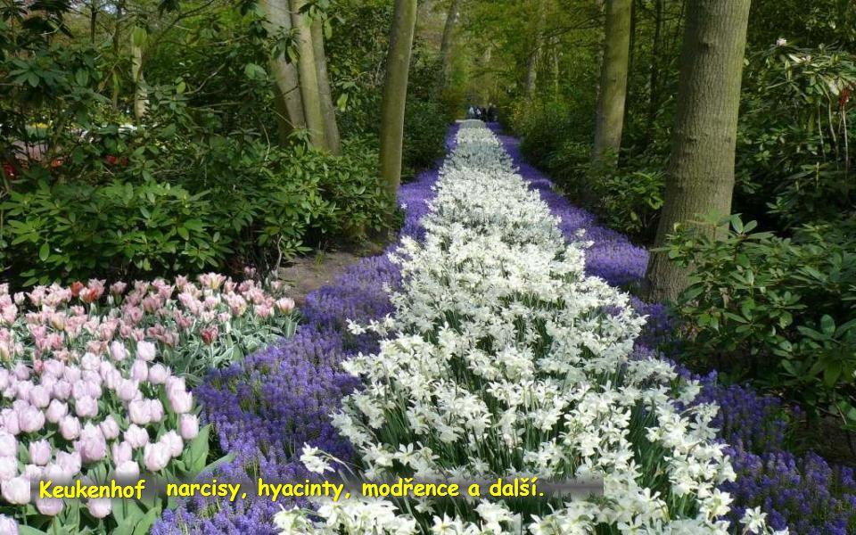 každé jaro zde rozkvétá na sedm mil. cibulovin, především tulipánů. Keukenhof