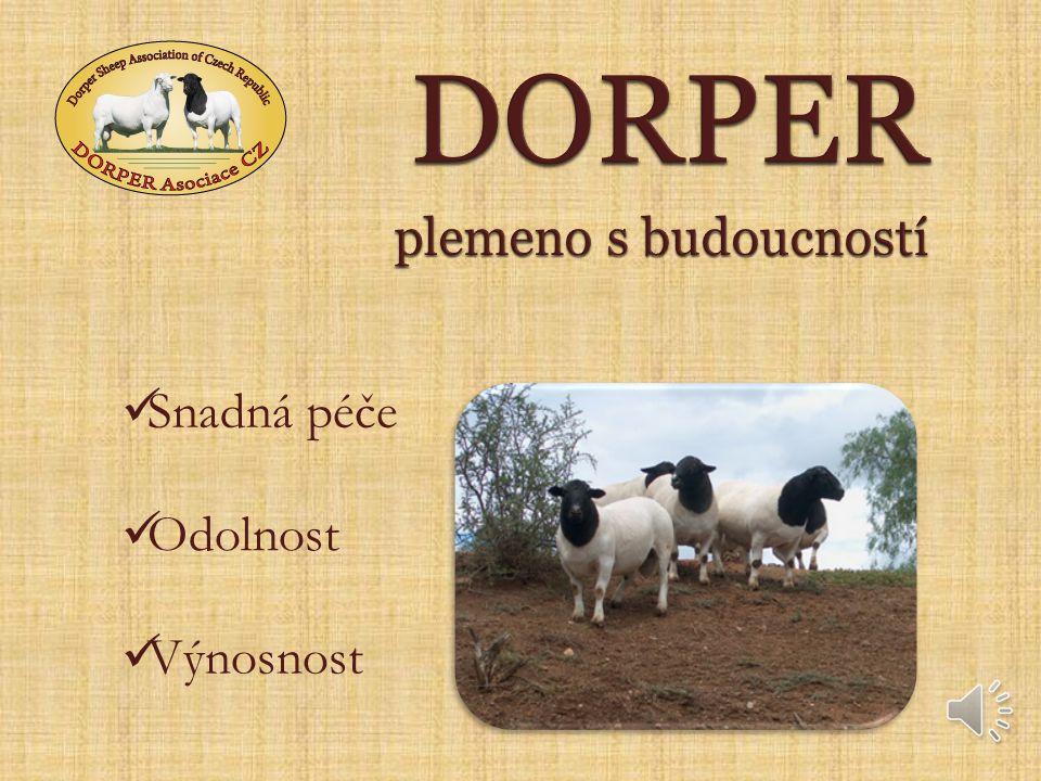 PERSKÁ ČERNOHLAVÁ OVCE Odolné, tlustoocasé plemeno s četnými porody (po 8 měsících), výbornými mateřskými vlastnostmi a kvalitní kůží CAPE GLOWES.